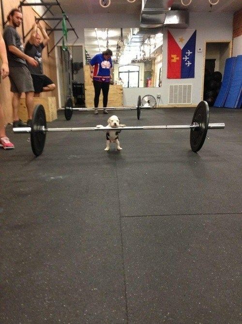 do you even lift puppy funny