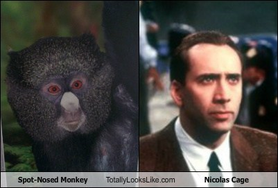 totally looks like,nicolas cage,monkey