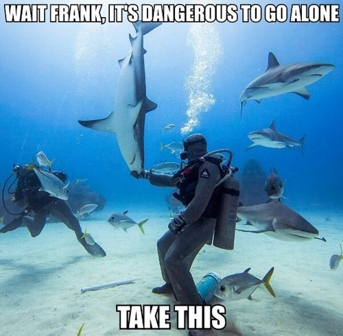 its dangerous to go alone sharks animals - 7753927168