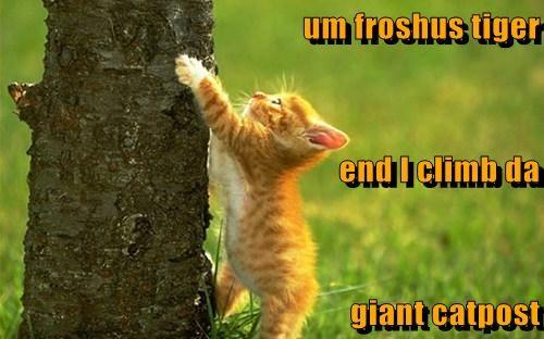 um froshus tiger end I climb da giant catpost