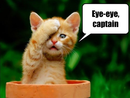 Eye-eye, captain