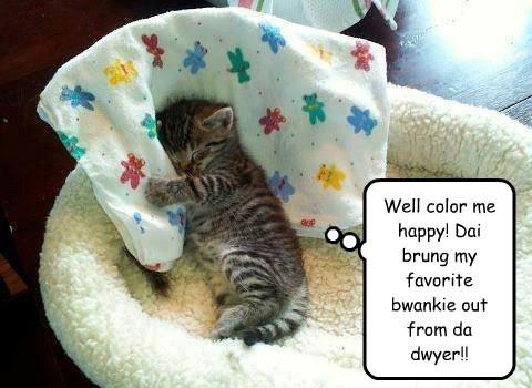 kitten blanket - 7754040320