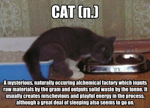 CAT (n.) A mysterious, naturally occuring alchemical factory which inputs raw materials by the gram and outputs solid waste by the tonne. It usually creates mischevious and playful energy in the process, although a great deal of sleeping also seems to go on.