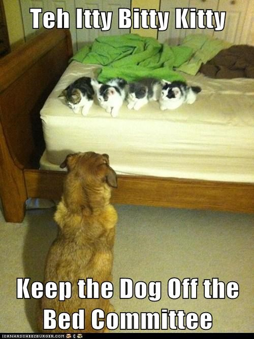 dogs,bed,itty bitty kitty committee,Cats,funny