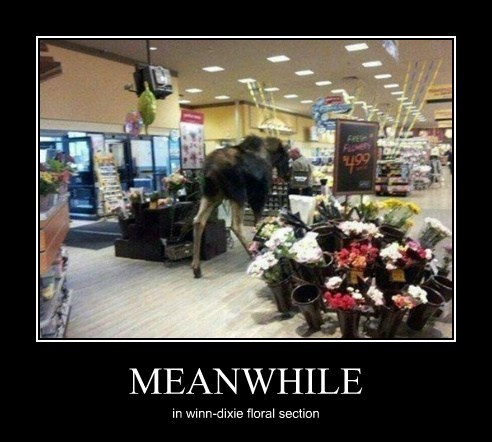 MEANWHILE in winn-dixie floral section