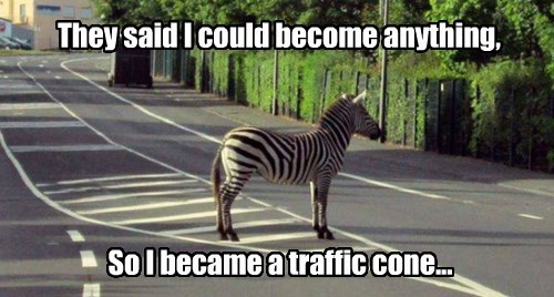 zebra,they said i could be anything,traffic cone