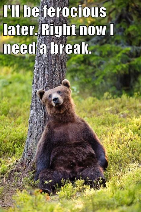 scare bear break funny - 7754790656
