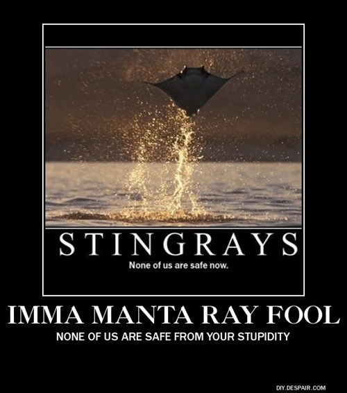 manta ray funny flying - 7754820096