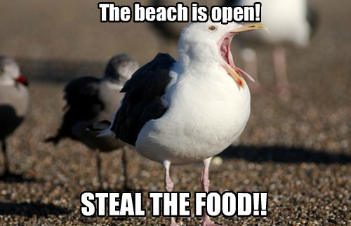 stealing,beach,seagulls,food,funny