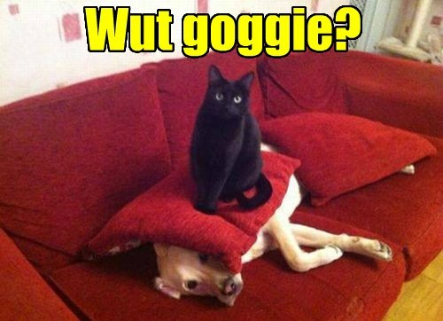 Pillow dogs goggie Cats funny - 7755061760