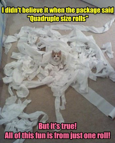 toilet paper,mess,funny