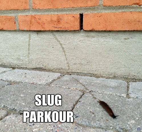 parkour extreme funny slug - 7755101440