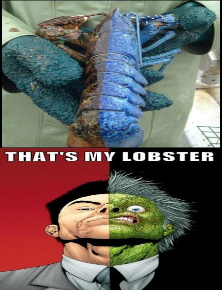 lobster two face funny