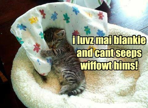 blankie kitten sleeping - 7755255808