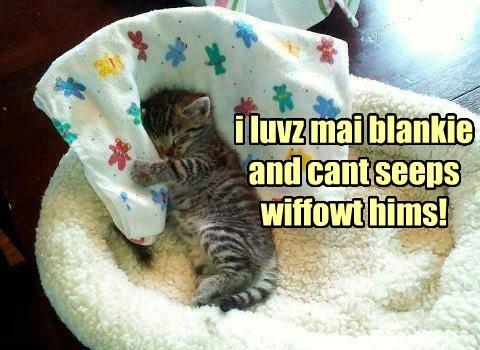 blankie kitten sleeping - 7755255808