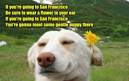 San Fransico,flowers