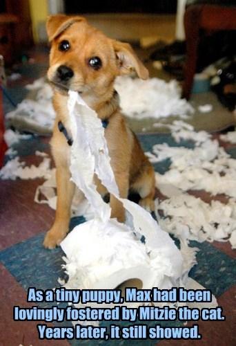 toilet paper - 7755322880