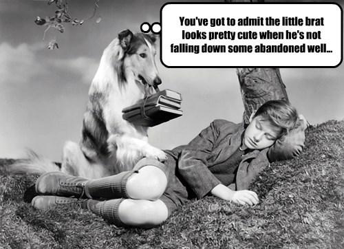lassie funny - 7755326720