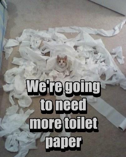 toilet paper - 7755337984