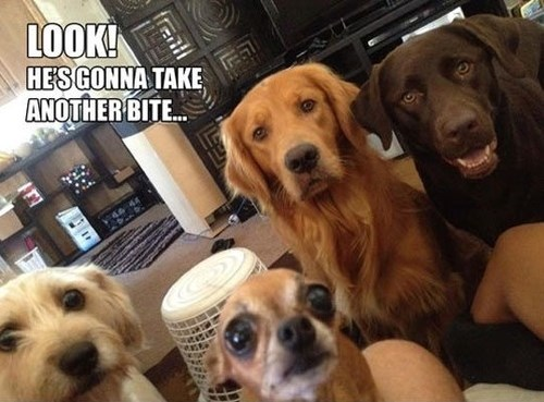 Funny dog picture and meme of a bunch of dogs staring at someone who is eating something.