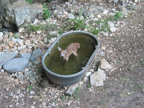 A doe in a tub