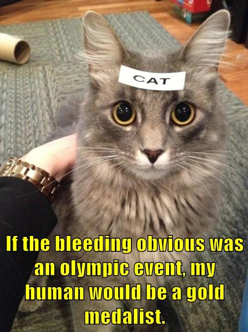 If the bleeding obvious was an olympic event, my human would be a gold medalist.
