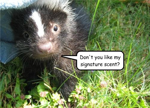 skunk scent cute funny - 7756023552