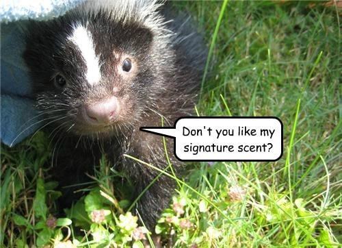 skunk scent cute funny - 7756023552