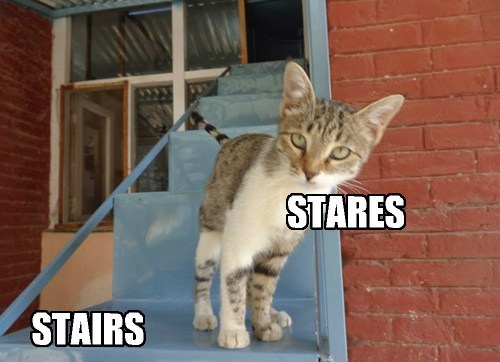 stairs,stare,funny,vocabulary