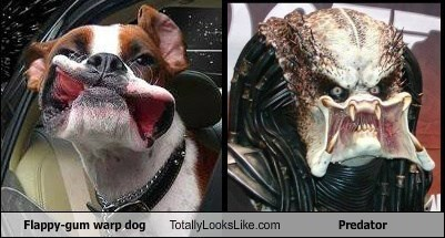 Predator,totally looks like,dogs