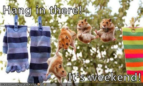 hang in there weekend - 7756353536