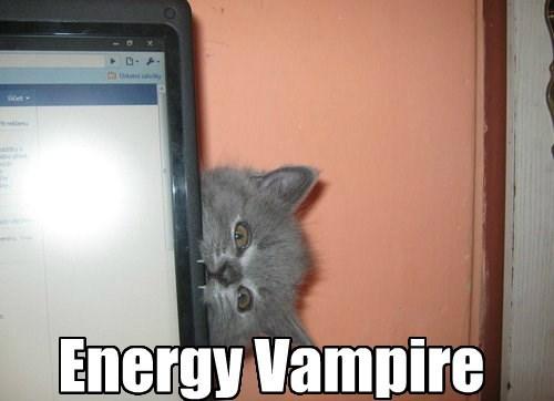 kitten bite funny energy - 7756563968