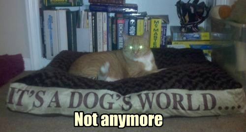glowing eyes,dog bed,funny