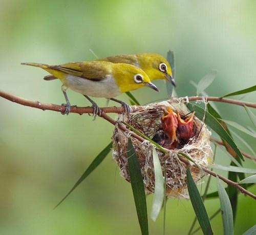 birds feeding - 7756681728