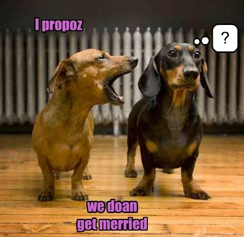 marriage,dachshund