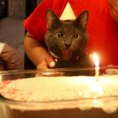 birthday,candle,cute