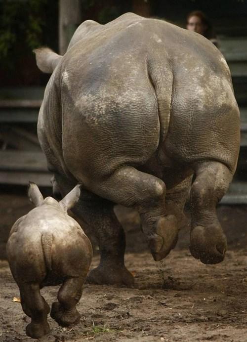 Babies rhino hopping cute - 7757555456