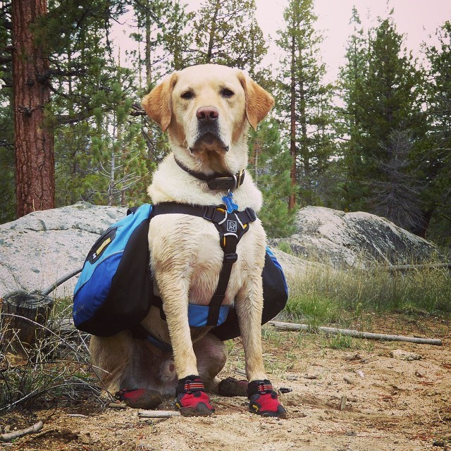 dogs Hiking Reddit - 775941