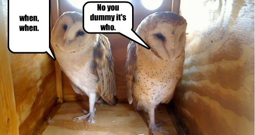 learning owls questions funny