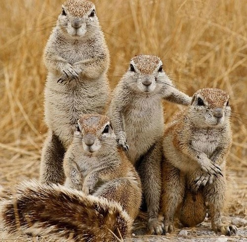 squirrel cute grass family
