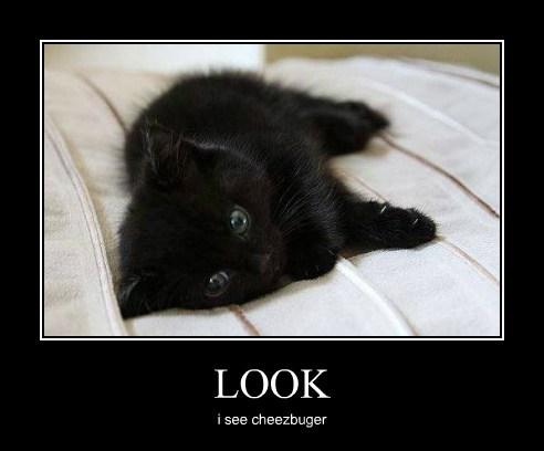 Cheezburger Image 7760206848