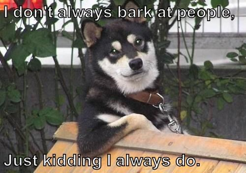 I don't always bark at people, Just kidding I always do.