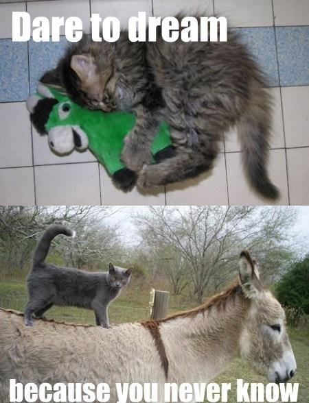 dreams,Cats,funny,donkeys
