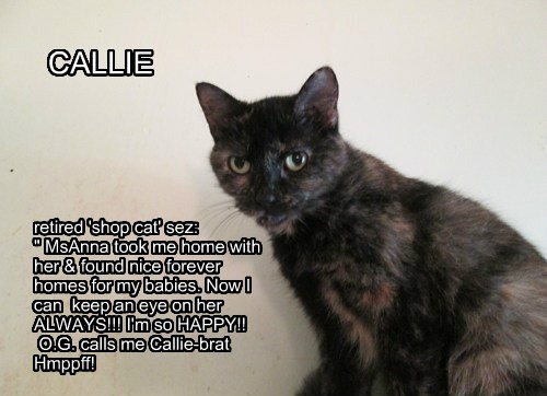 "CALLIE retired 'shop cat' sez: "" MsAnna took me home with her & found nice forever homes for my babies. Now I can keep an eye on her ALWAYS!!! I'm so HAPPY!! O.G. calls me Callie-brat Hmppff!"