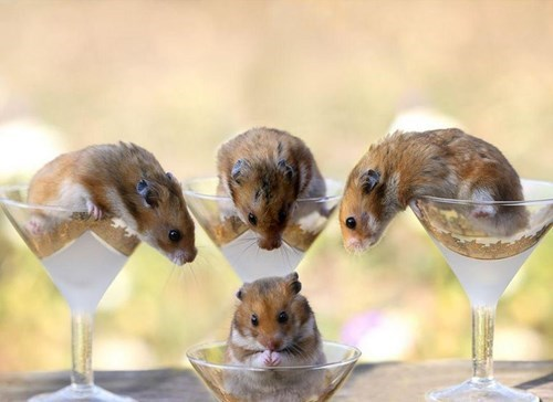 crunk critters,martinis,mice