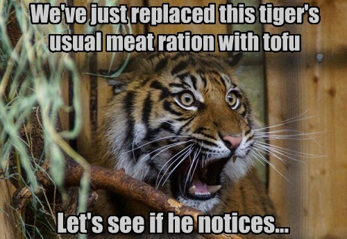 hungry,tigers,tofu,shocked