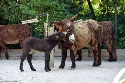 donkey - 7762747136