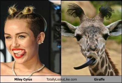 tongue,giraffes,MTV VMAs,totally looks like,miley cyrus
