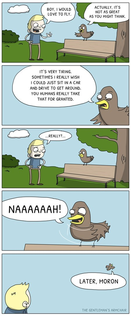 Effing Birds