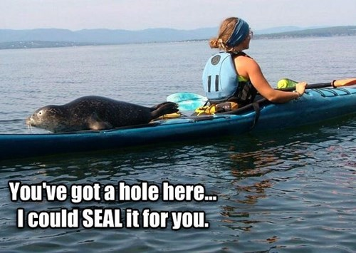pun seal kayak - 7763549184